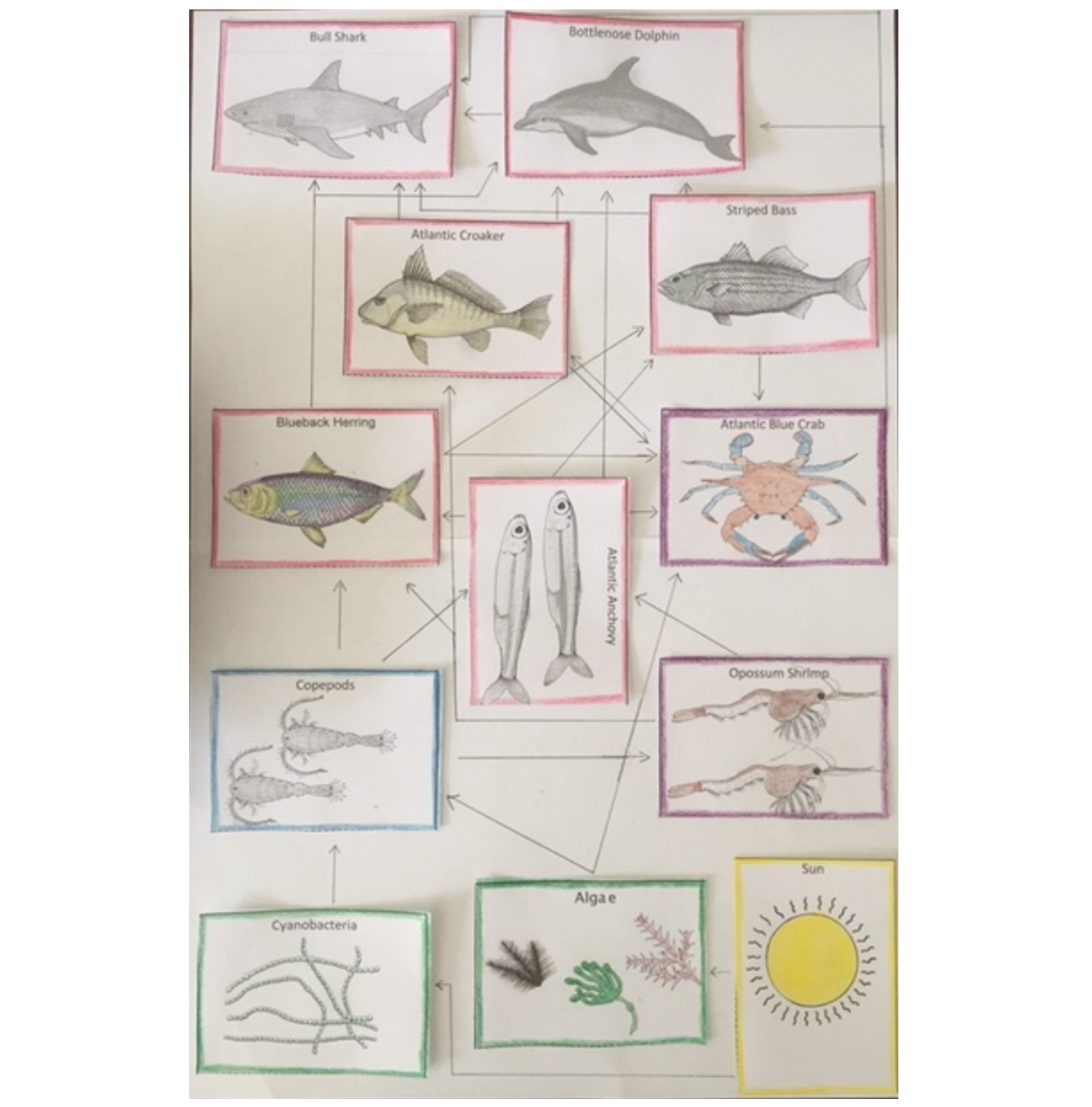 ocean food web COVER PAGE 5